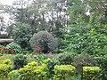 Bhandarkhal Garden 135.jpg