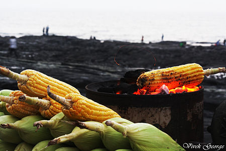 Bhutta by the Sea Side.jpg