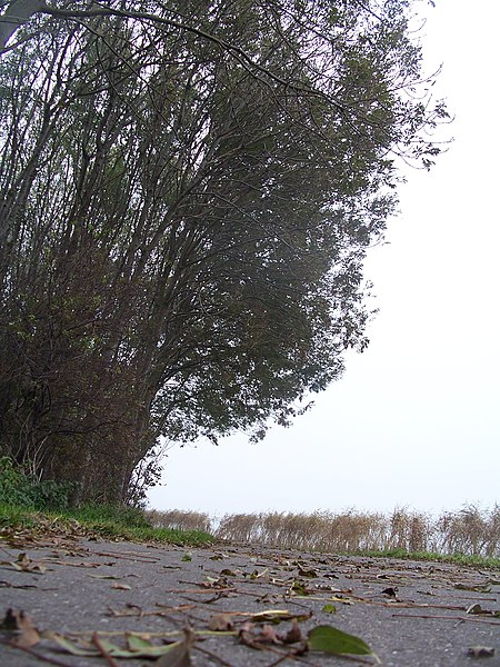 File:Bicycle road from Den Hoorn to 't Woud - panoramio.jpg