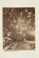 Bild från familjen von Hallwyls resa genom Algeriet och Tunisien, 1889-1890 - Hallwylska museet - 91863.tif