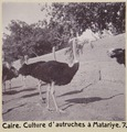 Bild från familjen von Hallwyls resa genom Egypten och Sudan, 5 november 1900 – 29 mars 1901. Kairo - Hallwylska museet - 91577.tif