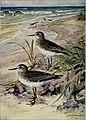 Bird-lore (1911) (14568919377).jpg
