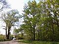 Biskupinska Poznan, avenue 01.jpg