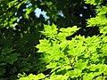 Bistrita - Parcul Central (819507042).jpg