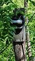Black Rat Snake - Elaphe obsoleta 5.jpg