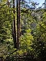Blackwater Falls State Park WV 37.jpg