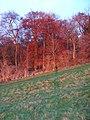 Bloom Wood - geograph.org.uk - 99272.jpg