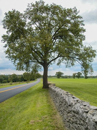 Bluegrass region - Image: Bluegrass stonewall 8097