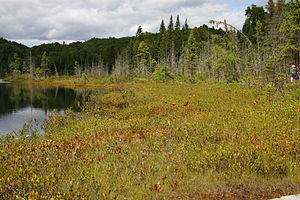 La Mauricie National Park - Lac de la Tourbière (Lake Bog)