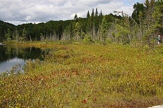 La Mauricie National Park - Lac de la Tourbière (Lake Bog)