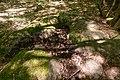 Bois des Roches Souzy-la-Briche n5.jpg