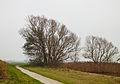 Bomengroep aan fietspad om Langweerderwielen (Langwarder Wielen). Oostkant 05.jpg