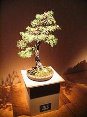 Bonsai IMG 6403.jpg