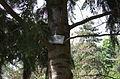 BotGardenFomin DSC 0129-1.jpg