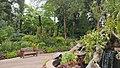 Botanical garden Singapore (38473355934).jpg