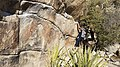 Bouldering at Gunsmoke Wall (31031979795).jpg