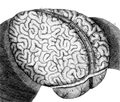 Brain surface by Raymond Vieussens, 1684.png