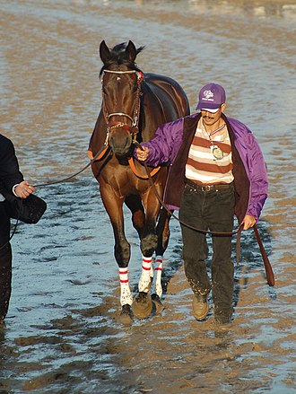 Street Sense (horse) - Image: Breeders Cup Classic 2007 Street Sense
