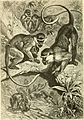 Brehms Tierleben; allgemeine kunde des thierreichs. Mit 1910 abbildungen im text, 11 karten und 180 tafeln in farbendruck und holzschnitt. (1893) (20418849181).jpg