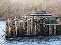 Bridge pier of the old Border Counties Railway viaduct - close up - geograph.org.uk - 1057561.jpg