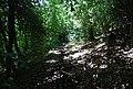 Bridleway, Oldbury Woods - geograph.org.uk - 856720.jpg