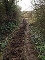 Bridleway 19-5, East Lyng - geograph.org.uk - 377185.jpg