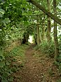 Bridleway between Haddon Wood and Burton - geograph.org.uk - 892479.jpg