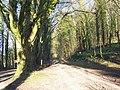 Bridleway to Asserton Farm - geograph.org.uk - 372316.jpg