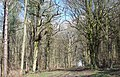 Broad Footpath into Grovely Woods - geograph.org.uk - 302090.jpg
