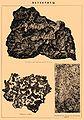 Brockhaus and Efron Encyclopedic Dictionary b37 166-0.jpg