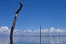 Brokopondo Lake Suriname.jpg