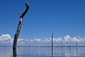 Brokopondo Reservoir - Image: Brokopondo Lake Suriname