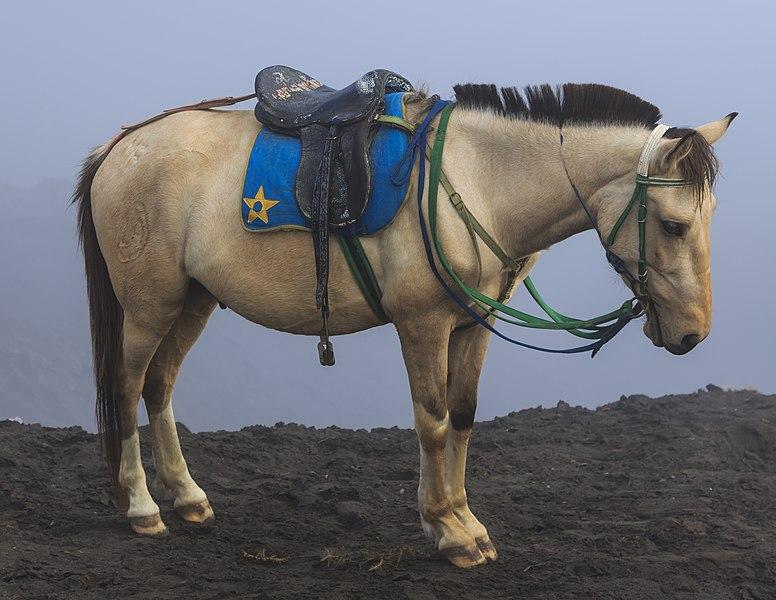 File:Bromo-Tengger-Semeru-National-Park Indonesia Horses-02.jpg