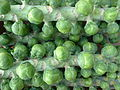 Brussels sprouts (4103982312) (2).jpg