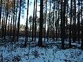 Bryansky District, Bryansk Oblast, Russia - panoramio (40).jpg