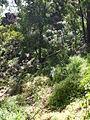 Budj Bim ‐ Mt Eccles National Park, Victoria, Australia 33.jpg