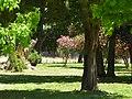 Buin, Chile - panoramio (1).jpg