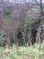 Bull Pit - geograph.org.uk - 87298.jpg