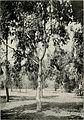 Bulletin (1902-1905) (20421699585).jpg