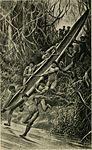 Bulletin (1948) (20418033562).jpg