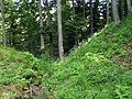 Burgstall Lichtenegg GO-2.jpg