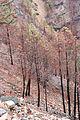 Burnt Forest 4 (2293586705).jpg