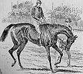 Busybody (horse).jpg