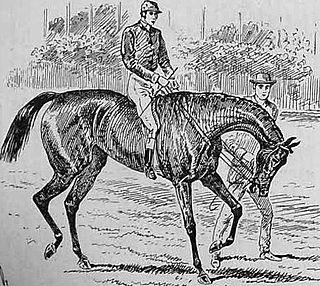 Busybody (horse) British-bred Thoroughbred racehorse