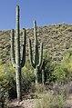 Butcher Jones Trail, Burro Cove and Beyond, Tonto National Park, Arizona - panoramio (21).jpg