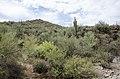 Butcher Jones Trail to Pinter's Point Loop, Tonto National Park, Saguaro Lake, Ft. McDowell, AZ - panoramio (156).jpg