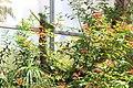 Butterfly Rainforest FMNH 44.jpg