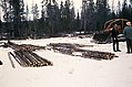 C.1961. Lodgepole pine dwarf mistletoe sanitation logging. Deschutes National Forest, Oregon. (35678880890).jpg