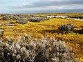 CARRIZO - Wildflowers of 05 - 9 (940524116).jpg