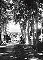 COLLECTIE TROPENMUSEUM Een door bomen geflankeerde straat TMnr 60018634.jpg